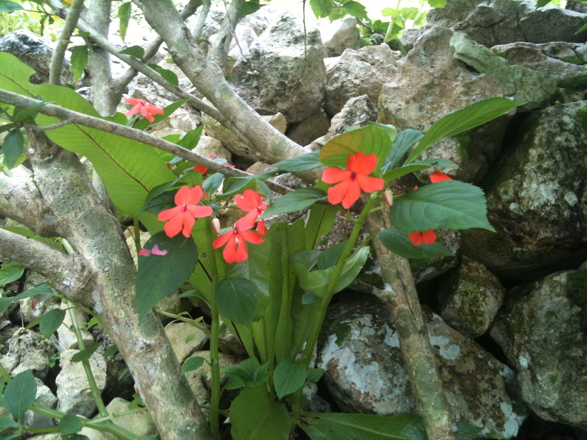 Bright red flowers growing wild