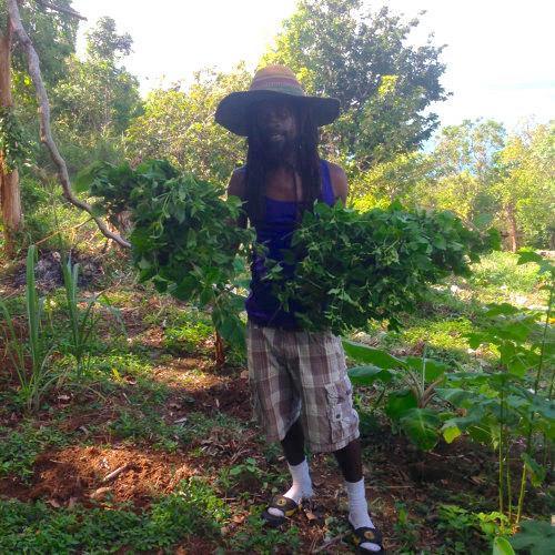 Raphel Blake, owner of Dr Rasta Tea House, holds bunches of plants