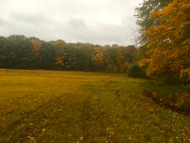 A field surrounded by autumn trees