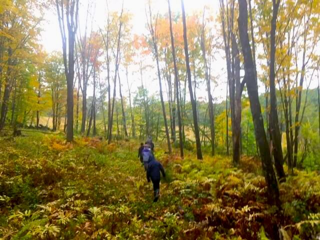 Hiking through the colorful forest